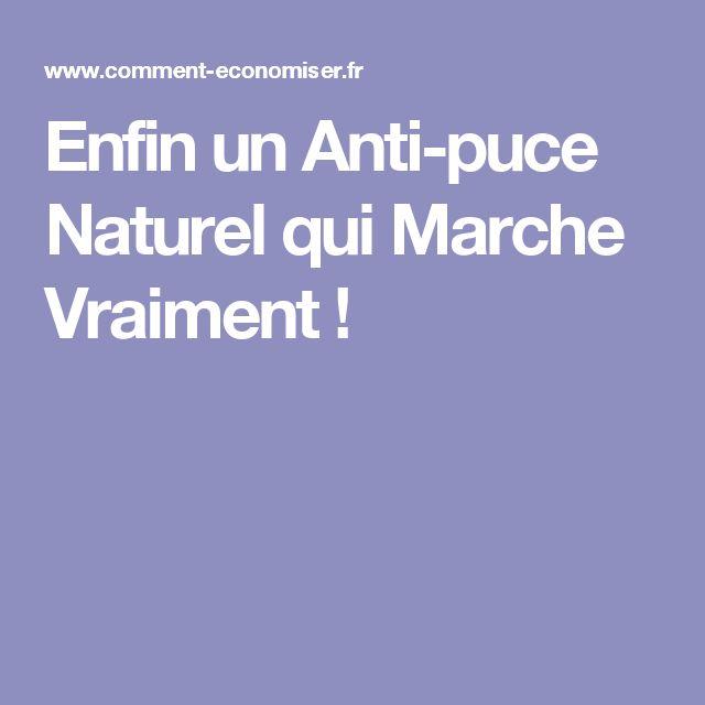 Enfin un Anti-puce Naturel qui Marche Vraiment !