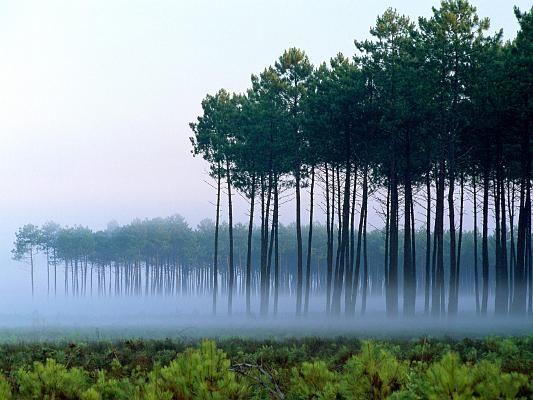 Forêt des Landes Aquitaine