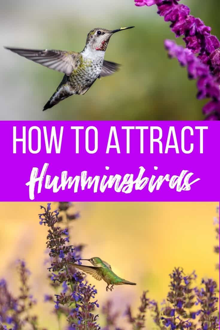 How To Attract Hummingbirds And Butterflies To Your Garden How To Attract Hummingbirds Habitat Garden Pollinator Garden