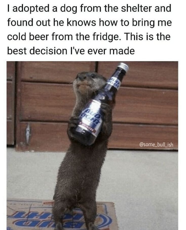 HOT MEMES FOR TODAY #276 – 11.03.2018