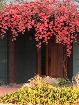 Best 25 california native garden ideas on pinterest california native plants xeriscape - Planting fruit trees in the fall a garden full of vigor ...