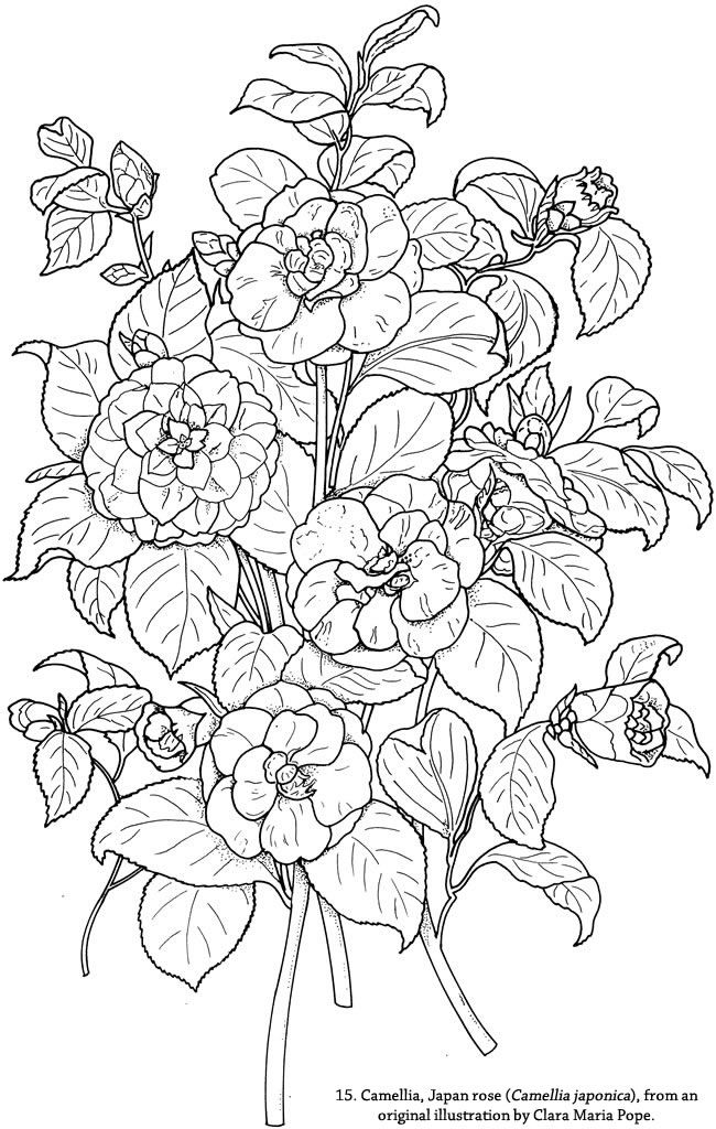 Color Your Own Great Flower Prints - (doverpublications)