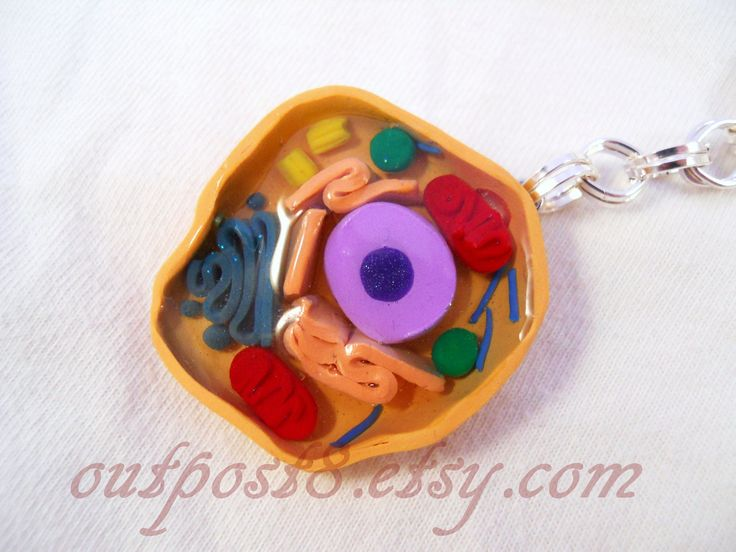 how to make a model of mitochondria with clay