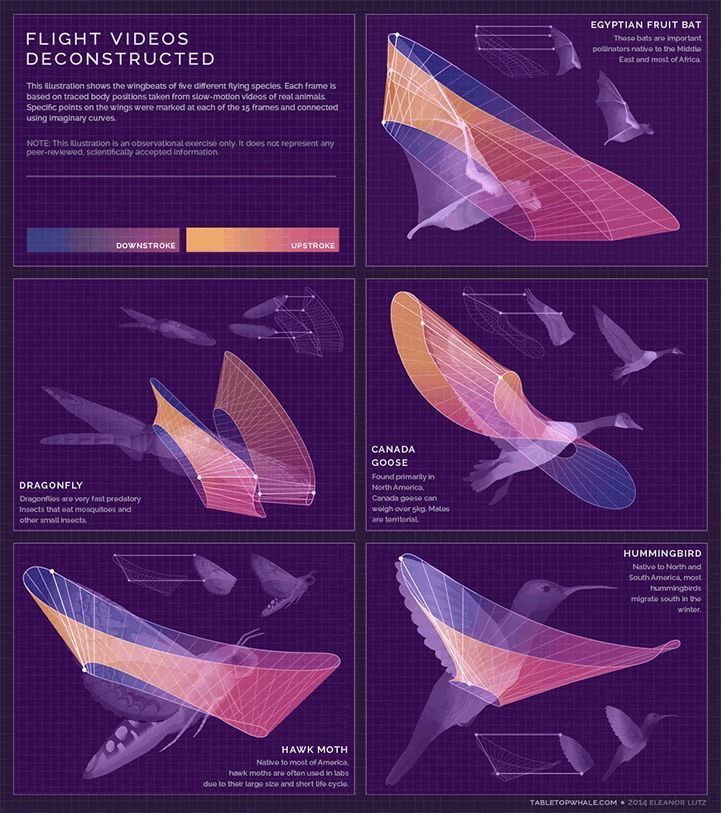 """坂井直樹の""""デザインの深読み"""": 人体の仕組みや鳥が飛ぶ方法に関する情報等の興味深いインフォグラフィックを、GIFをアニメーション化している。"""
