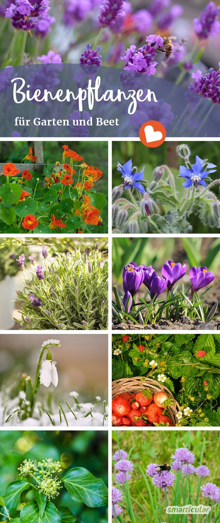 Die Besten Bluten Fur Bienen Balkon Ideen Bee Friendly Plants Best Flowers For Bees Amazing Flowers