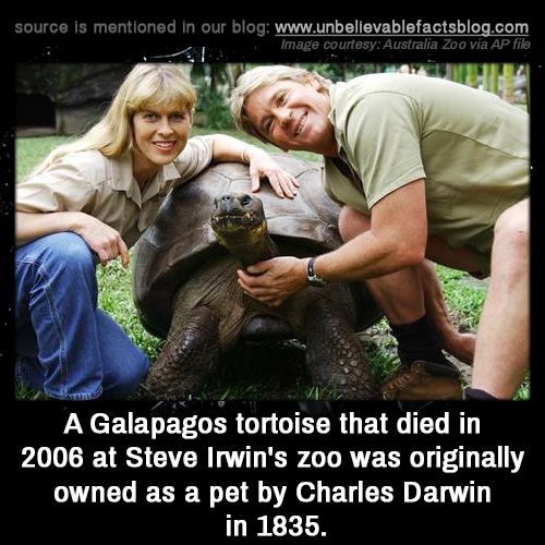 A Galapagos tortoise that died in 2006 at Steve Irwin's zoo was originally owned as a pet by Charles Darwin in 1835.