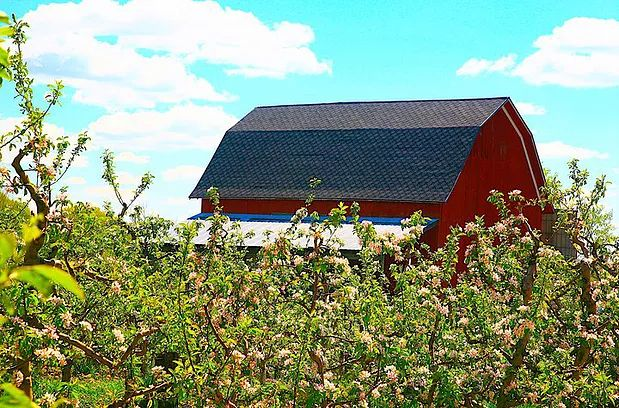 Blok Orchard, Ada, Michigan. You Pick blueberries, raspberries and cherries. #youpickfarm #gopicking #adamichigan
