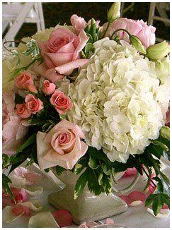 hydrangea garden rose - Google Search