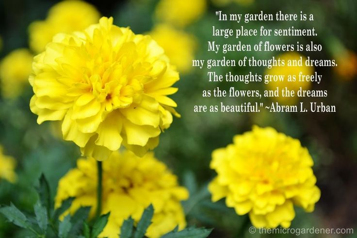 In my garden there is a large place for sentiment. My garden of flowers is also my garden of thoughts and dreams. The thoughts grow as freely as the flowers, and the dreams are as beautiful. More tips @ themicrogardener.com