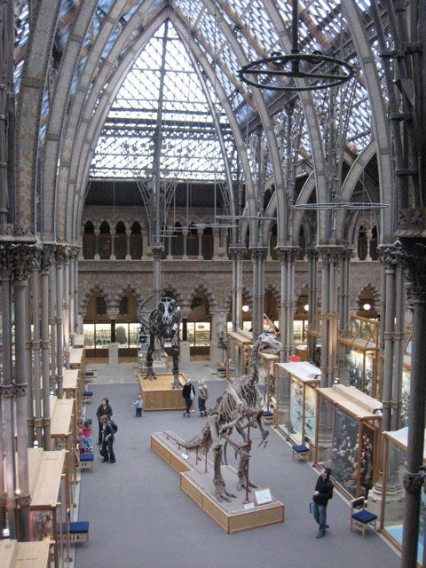 GREAT HALL, OXFORD UNIVERSITY NATURAL HISTORY MUSEUM // THOMAS DEANE & BENJAMIN WOODWARD // 1855-1860 --- Neo-gothic building. Heavily influenced by the critic John Ruskin, who made suggestions during the design process. Glass roof and cast iron pillars were distinctly modern.