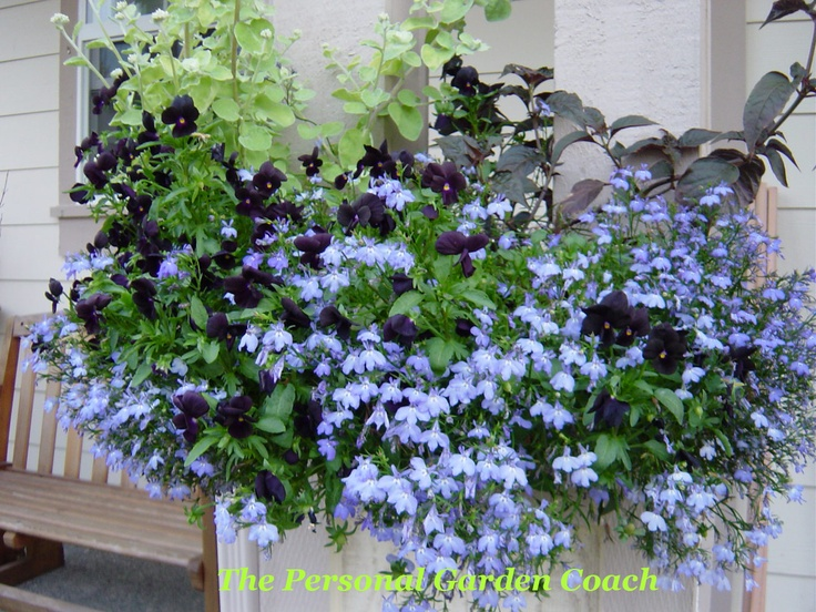 shade plants for windows 89 best window boxes images on pinterest windows flowers and