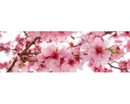 Fototapety do kuchyne - Kvety jablone 60 x 260 cm Kliknutím zobrazíte detail obrázku.