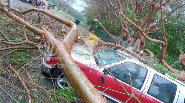 Le cae un árbol a camioneta en Poza Rica - http://www.esnoticiaveracruz.com/le-cae-un-arbol-a-camioneta-en-poza-rica/