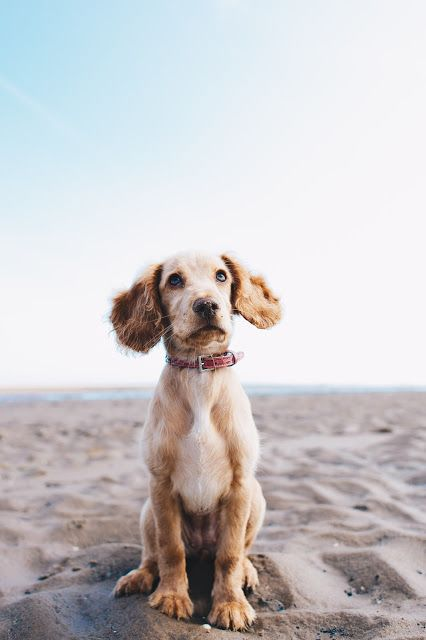 Top 4 Dog-Friendly Hotels Around The World | City of Creative Dreams dog friendly hotels road trips, dog friendly hotels pets, dog friendly hotels travel, dog friendly hotels vacations