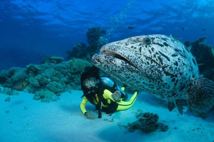 Taka Dive - 4 Day / 3 Nights - Cod Hole from $1310 Visit http://www.fnqapartments.com/tour-taka-dive-4-day-3-nights-cod-hole/area-cairns/  #cairnstourpackages