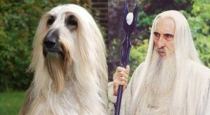 Animals Who Aren't Aware They Look Like Famous Fictional Characters (GALLERY)