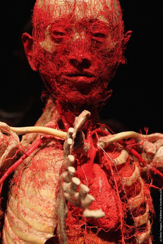 'Body Worlds' Exhibition. By Gunther Von Hagens.