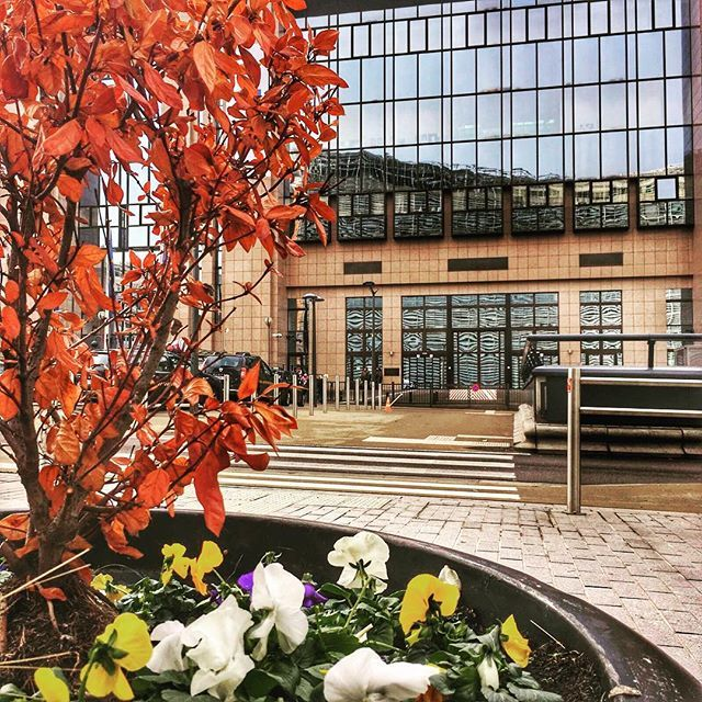 This is what our entrance looks like in an autumnal mood! Have a good weekend! #justuslipsius #eu #euco #reflection #glass #brussels #bxl #bruxelles