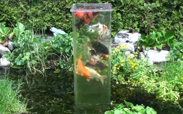 筒で泳ぐ魚