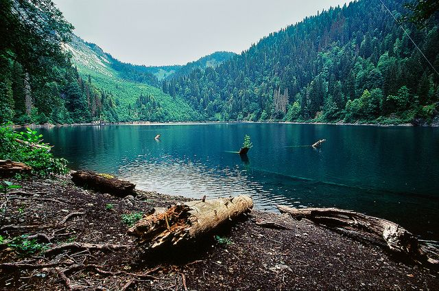 con una carpa!!!: Forests, Favorite Places, Peace Places, Beautiful Places, Lakes, Trees, Amazing Places, The World, World Photography