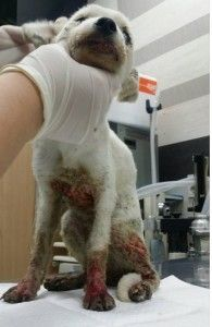 Puppies rescued from being boiled alive in Cheonan! - Stop the Dog and Cat Consumption in S. Korea!
