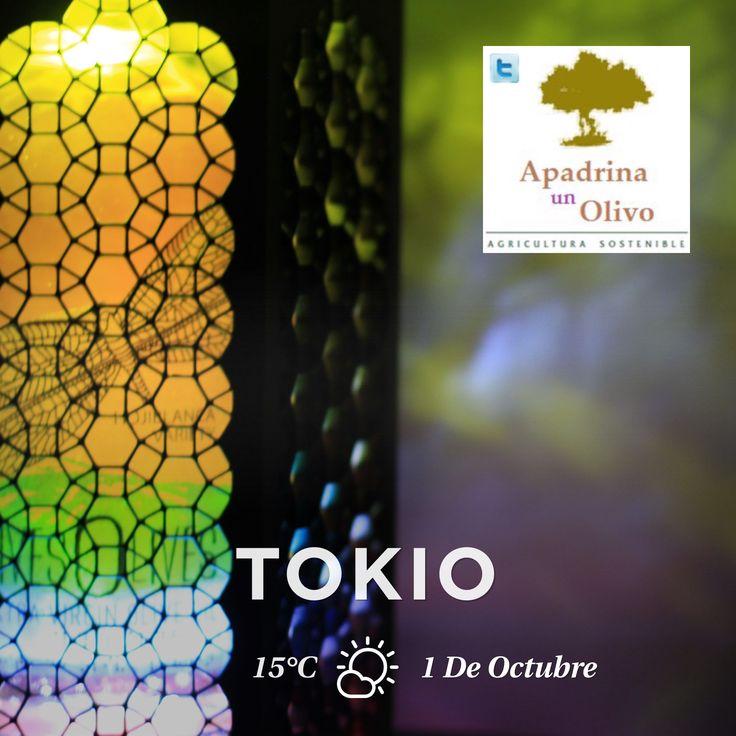Hoy con #LivesOlives en Tokio, entre los alimentos españoles que viajan a la Spain Gourmet Fair de Japón #spaingourmetfair un gran día #EVOO