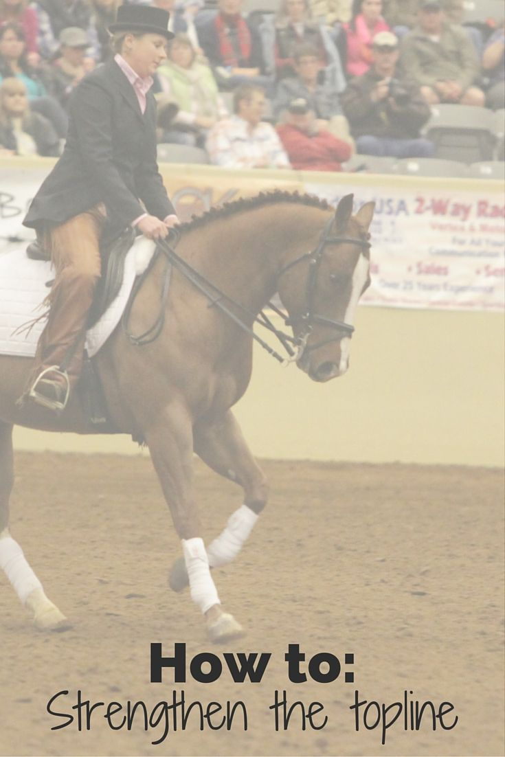 Strengthen a horse's haunches and topline with this dressage horse-training exercise.