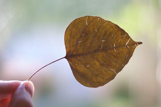 bodhi leaf   Tattoo id...