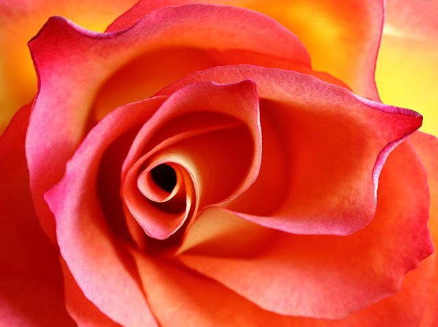 flower close up - Google Search