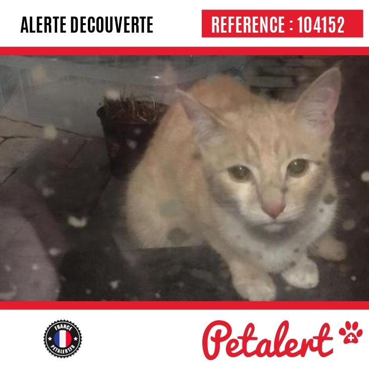 06.01.2017 / Chat / Valenciennes / Nord / France