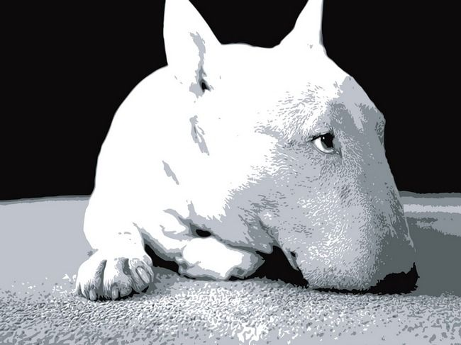 """""""English Bull Terrier, Pop Art Print"""" by Michael Tompsett, Castellon // English Bull Terrier Pop Art Print. Black  white vector pop art print. Available as a poster, fine art print and canvas print.  (id: 210) // Imagekind.com -- Buy stunning, museum-quality fine art prints, framed prints, and canvas prints directly from independent working artists and photographers."""