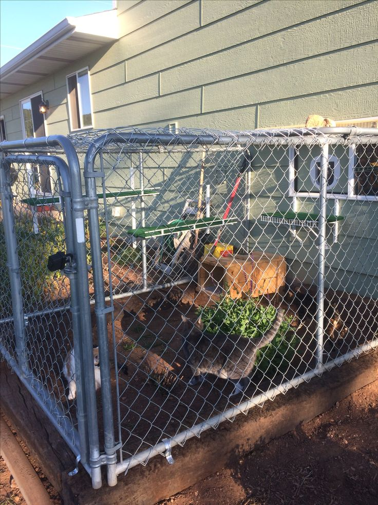 i made this catio from a used dog kennel and used shelving i got from