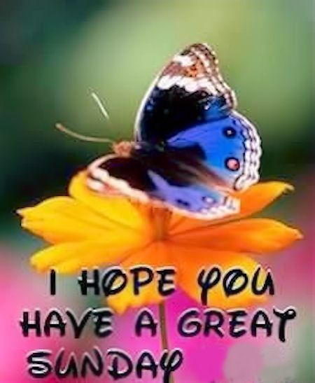 5apr14      Have a great Sunday quotes cute quote butterfly days of the week sunday sunday quotes