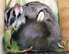 For Mammals | Backyard Buddies