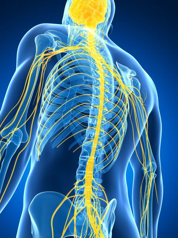 Quadriplegia Spinal cord injury, Vagus nerve, Multiple