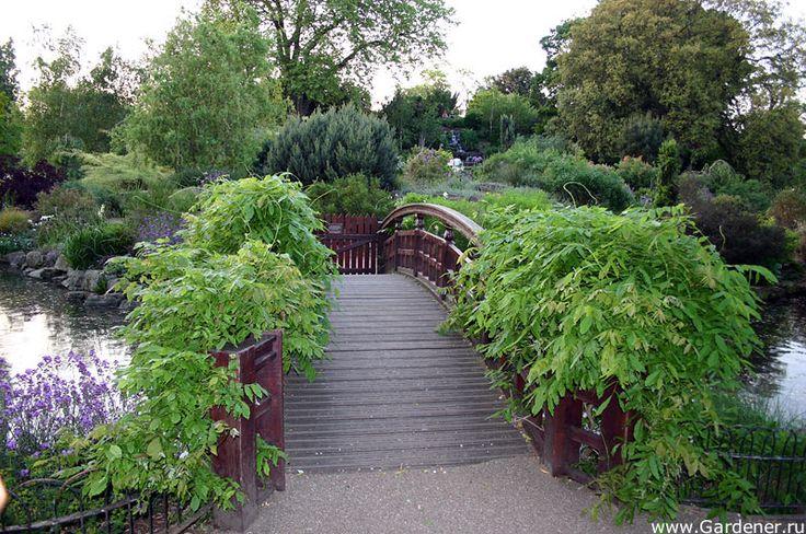 Regent's Park   Ландшафтный дизайн садов и парков
