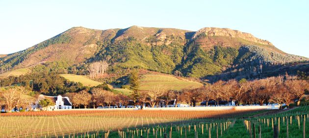 The legacy and supremacy of our wines start in our vineyards.  #FeelGroot
