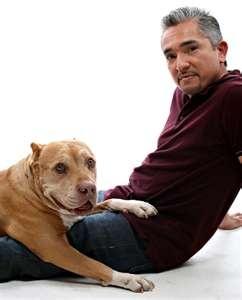 Daddy & Cesar: Pitt Bull, Follow Unstabl, Pitbull, Ripped Daddy, Packs Leader, Cesar Milan, Unstabl Packs, Cesar Millan, Dogs Whisperer