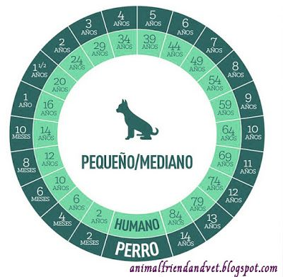 Animal Friend: EDADES PERRUNAS