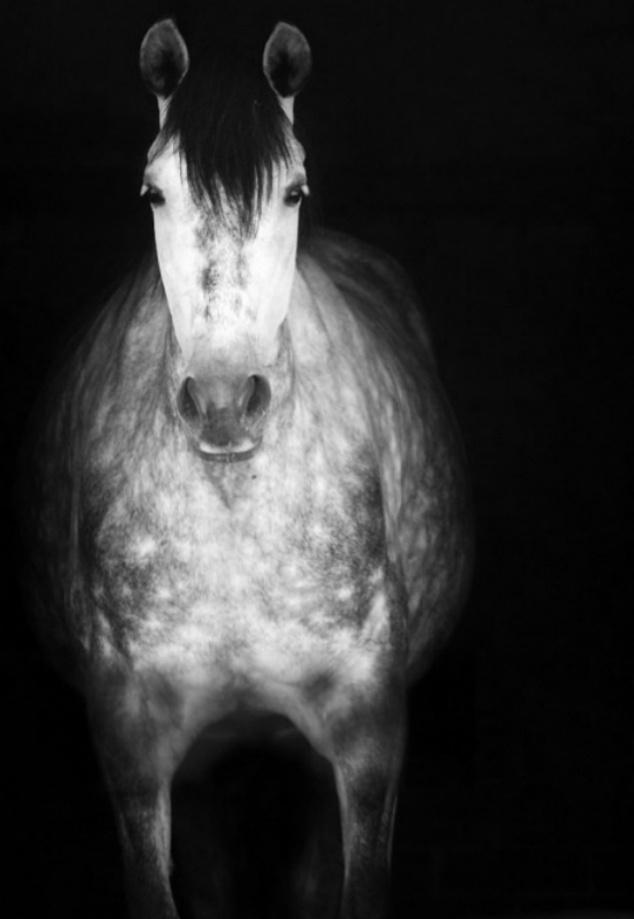 Horse •
