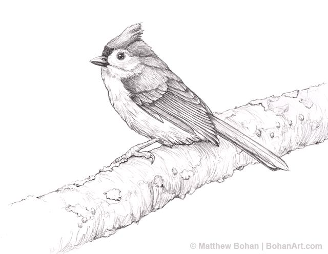 10 Best Birds To Draw Images On Pinterest