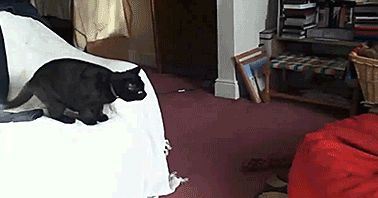 funny-gif-cat-jumps-bean-bag-chair - PBH2