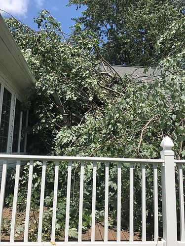 https://flic.kr/p/WFCYtd   Expert Tree Removal, Tree Trimming Service Annapolis, Maryland   OPEN from 8:00 am to 5:00 pm every day of the week! For More Information Visit Here: www.unlimbitedtreeservice.com/  Follow Us : www.unlimbitedtreeservice.com/   Follow Us : www.facebook.com/unlimbitedtreeservice   Follow Us : twitter.com/unlimbitedtree   Follow Us : followus.com/unlimbitedtreeservice   Follow Us : www.youtube.com/watch?v=gR1KlyN4o_0