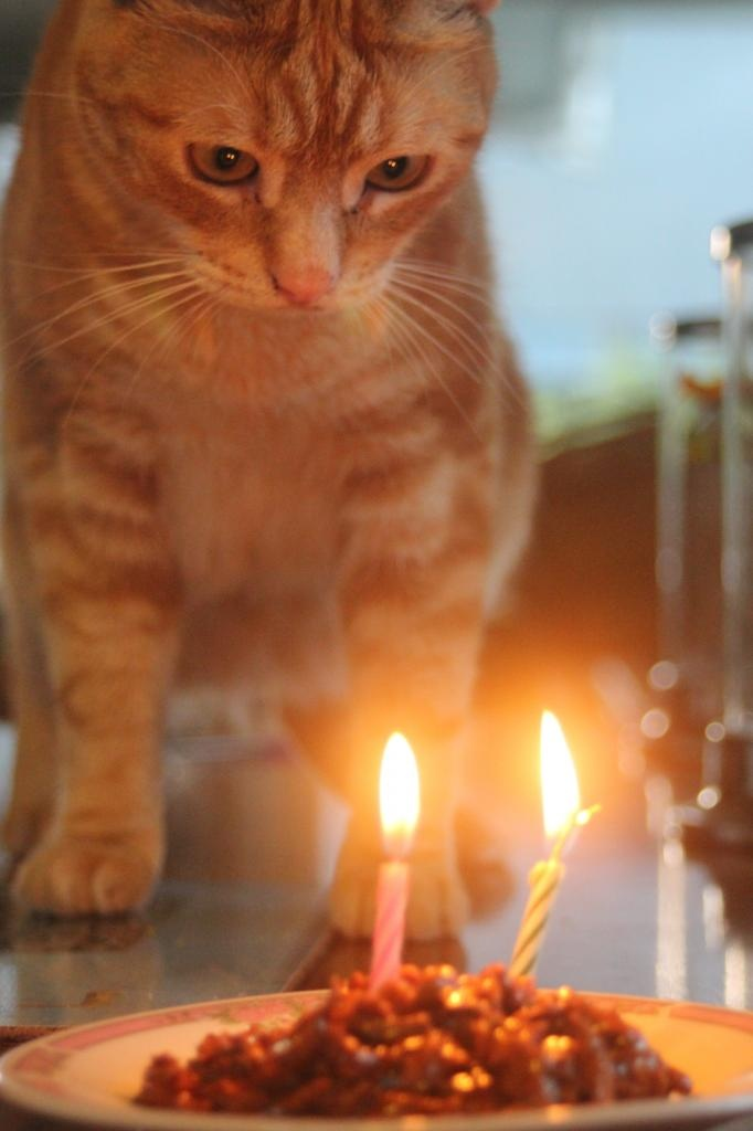 168 best Happy Birthday Cats images on Pinterest Kitty cats
