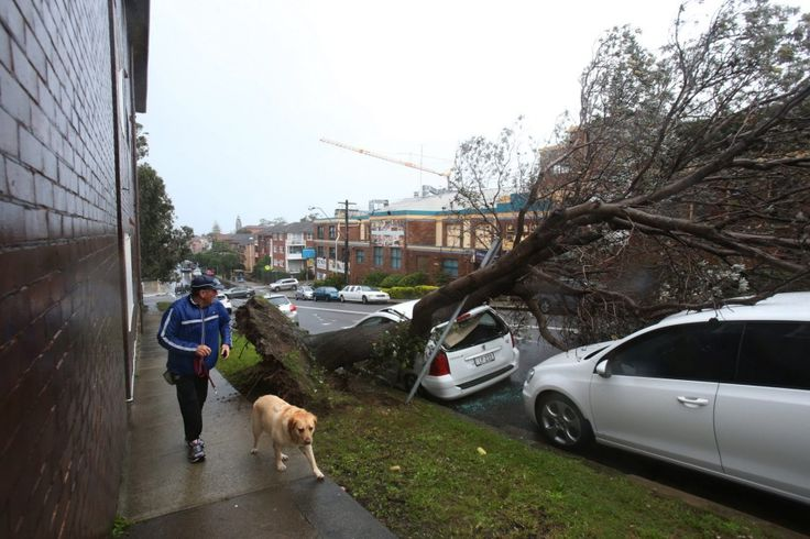 A tree has come down in Carr st, Coogee.
