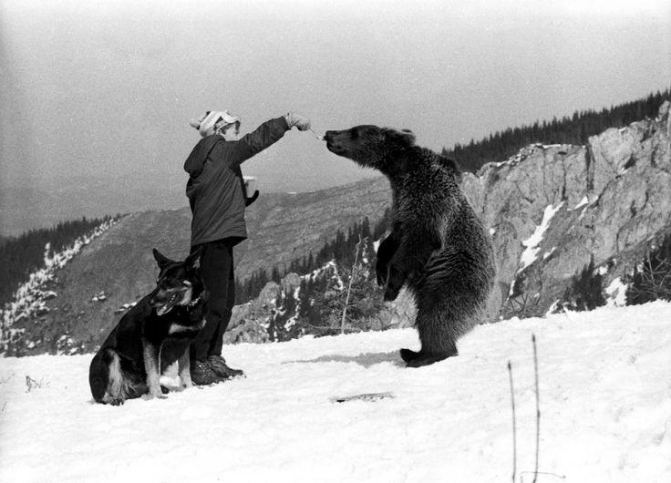 TOMEK I PIES (Saba w górach), dir.  Wadim Berestowski (1965)