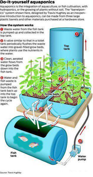 Aquaponics: Gardens Ideas, Pallets Gardens, Diy'S, Fish Tanks, Plants, Boxes Spring, Hydroponics, Diy Aquaponics, Fish Ponds