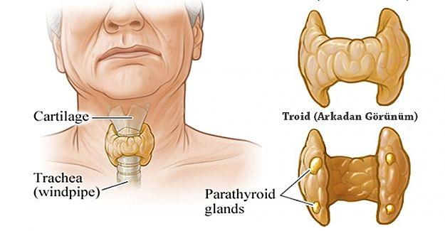 Tiroid Problemlerinin 10 Belirtisi