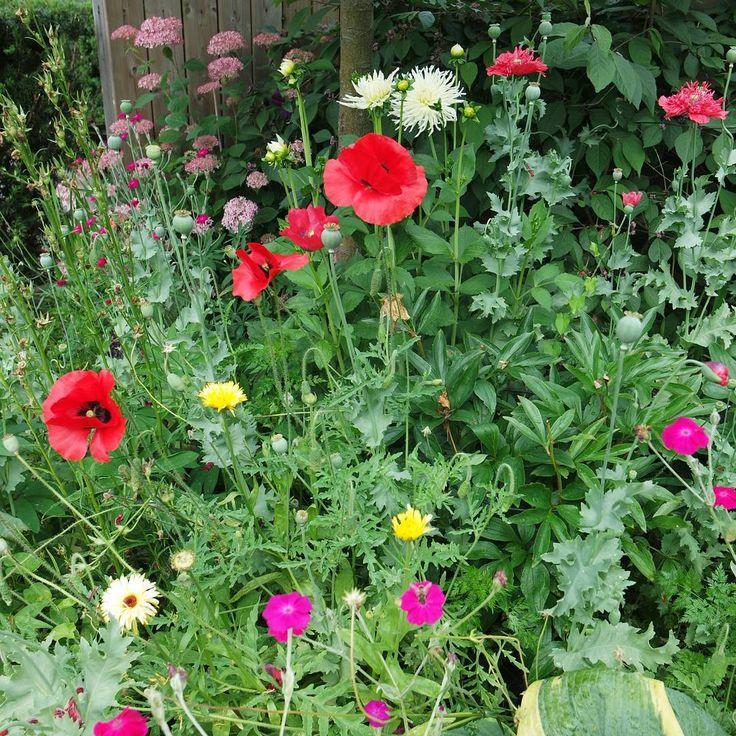 Love the colours and flowers in my garden! #mygarden #detuinvandora