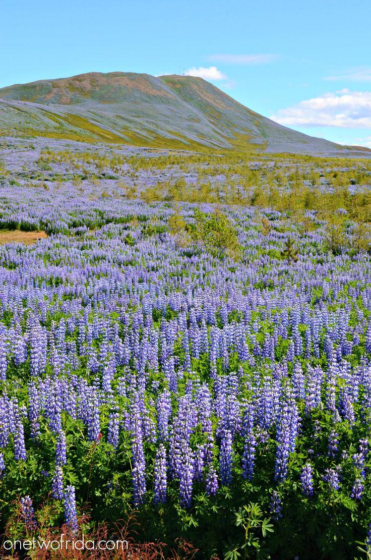 Husavik - Islanda